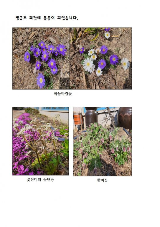 생금초 봄꽃